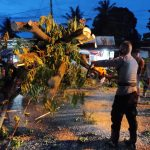 Aksi Cepat Tanggap Dit Samapta Polda Gorontalo Evakuasi Pohon Tumbang